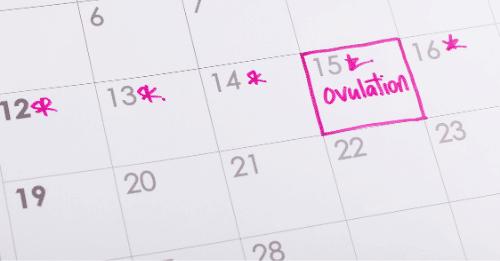 Fruchtbarkeitsrechner Kalender